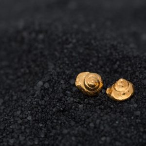 gold sea snails seashell studs