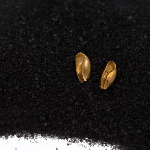 gold bubble seashell studs
